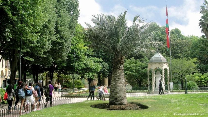 Las palmeras en la Plaza Gipuzkoa de San Sebastián